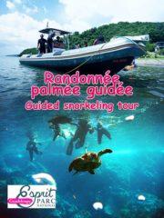 Rando palmée guidée Guadeloupe
